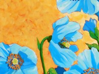 Himalayan-Poppies
