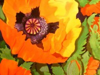 Poppy | Watercolour by Lee Rawn